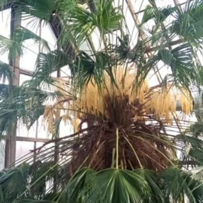Все в сад: в ботсаду расцвела пальма