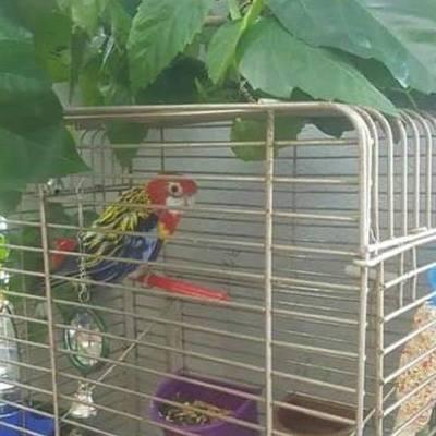 Киевские полицейские приютили попугая, который остался без хозяина