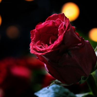 Что подарить женщине на 14 февраля: подсказки по знаку Зодиака от астрологов