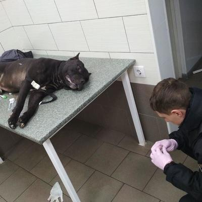В Киеве пьяный мужчина натравил своего бойцовского пса на посетителей супермаркета, собаку застрелили (фото)