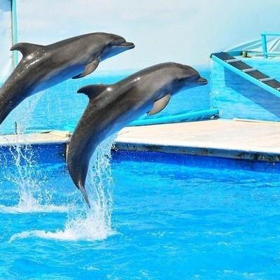 Киевские чиновники хотят потратить 12 миллионов на плавание детей с дельфинами