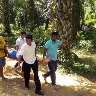 В Таиланде слон ударил туриста бивнем в живот