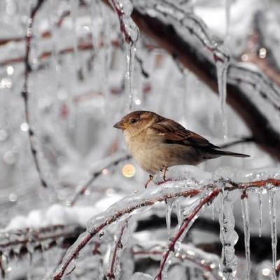 Сегодня в Украине до 10 градусов мороза