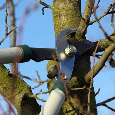 В Полтавской области дерево убило мужчину во время работ в саду