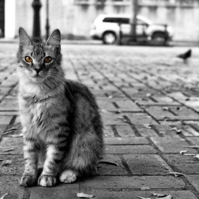 В Киеве заработала система онлайн-записи на бесплатную стерилизацию бездомных котов