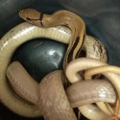 В квартиру на Троещине по вентиляции заползла змея (фото)
