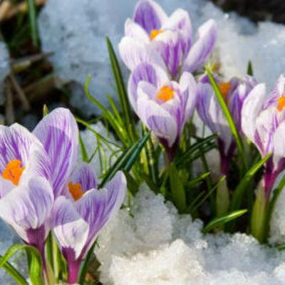 Стало известно, сколько украинцы будут отдыхать в марте