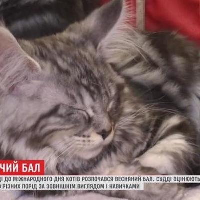 В Киеве начался весенний бал котов (видео)