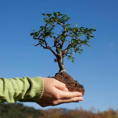 Киевлян зовут сажать деревья
