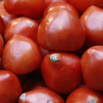В Киевской области в турецких помидорах нашли южноамериканскую моль