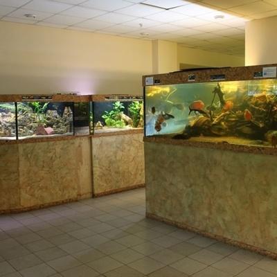 В Киеве на один день сделают бесплатной выставку аквариумных рыбок