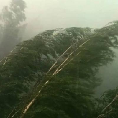Спасатели предупреждают о сильных порывах ветра