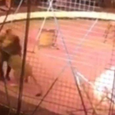 В Луганске на цирковом представлении лев напал на дрессировщика