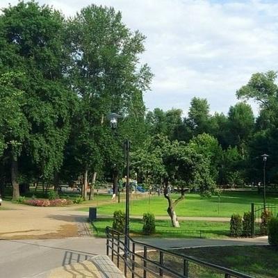 В Киеве за 4 года высадили около 50 тыс. новых деревьев