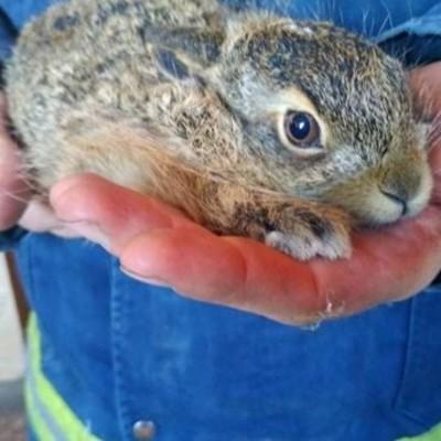 В Киевской области при масштабном пожаре спасли зайчонка