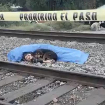 В Мексике собака преданно охраняла тело погибшего хозяина