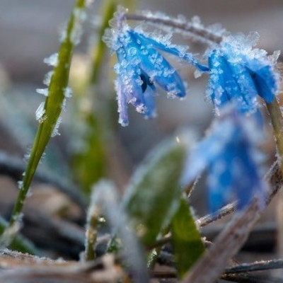 Украинцев предупредили про мокрый снег