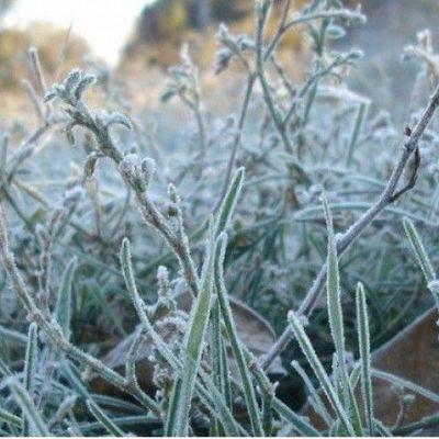 В Киеве ожидаются заморозки