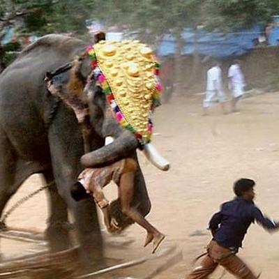 В Индии слон за ночь затоптал пять человек