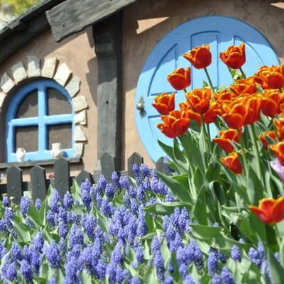 Как выглядит выставка тюльпанов на Певческом поле (фото)