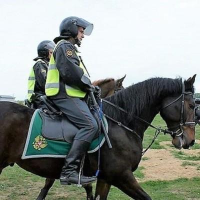 В Нацполиции работает почти 20 служебных лошадей
