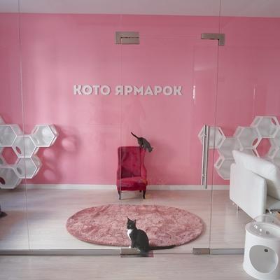 В столице появился Центр кототерапии