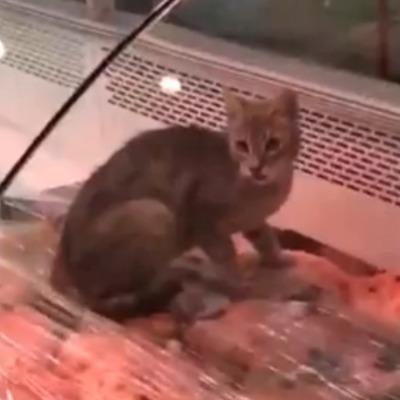 В столичном супермаркете кот ест мясо прямо с витрины (видео)