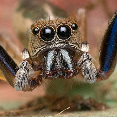 Врачи обнаружили живого паука в ухе пациентки (видео)