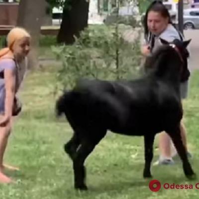В центре Одессы девочки-прокатчицы издевались над пони (видео)