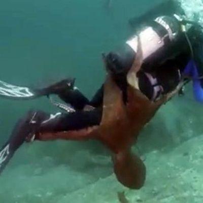 Навязчивый осьминог прицепился к дайверу (видео)