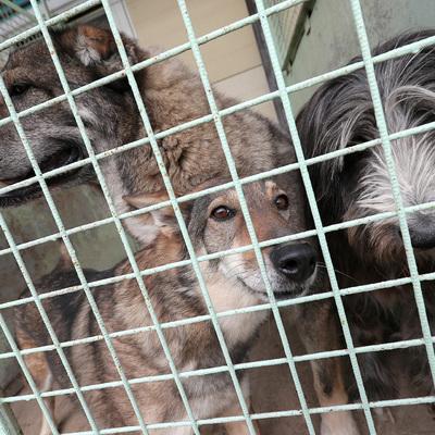 На Киевщине женщина заморила голодом более 20 домашних животных