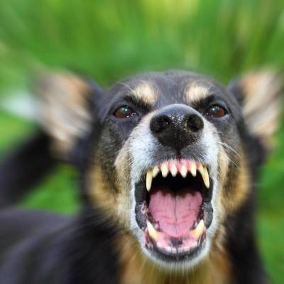 В Киеве пес искусал лицо годовалой девочке