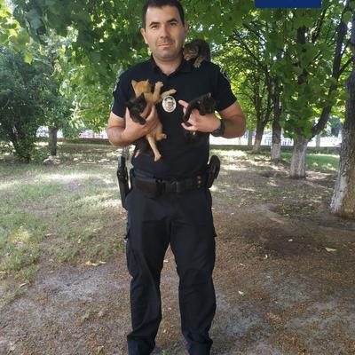 Киевские патрульные ищут хозяев для брошенных котят