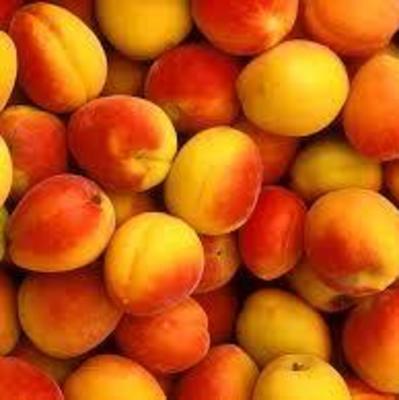 Медики рассказали о пользе абрикосов для здоровья