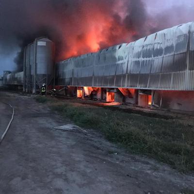 Под Киевом горела птицефабрика