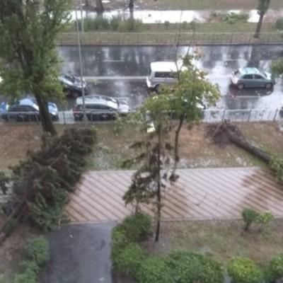 Сильный ветер и дождь повалили в Киеве десятки деревьев