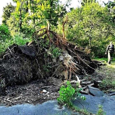 Стало известно, сколько деревьев в столице повалил вчерашний ураган