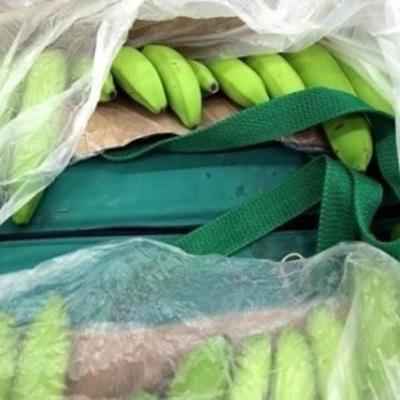 В Болгарии в бананах нашли 75 килограмм кокаина