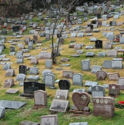Первое муниципальное кладбище домашних животных в Киеве: где оно будет расположено
