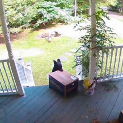 Медвежонок утащил в лес ящик с собачьей едой с крыльца дома (видео)