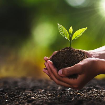 Все желающие смогут бесплатно получить саженцы лесообразующих видов деревьев