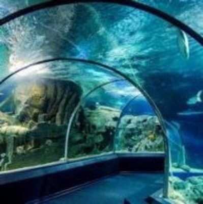 Кличко показал, как происходит масштабная реконструкция зоопарка стоимостью 530 миллионов
