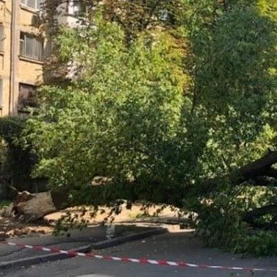В Киеве дерево придавило женщину  (видео момента падения)