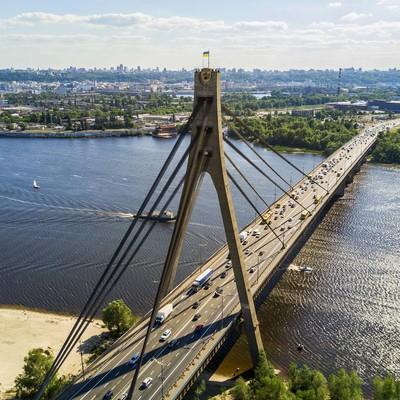 Под Московским мостом найдены десятки трупов летучих мышей