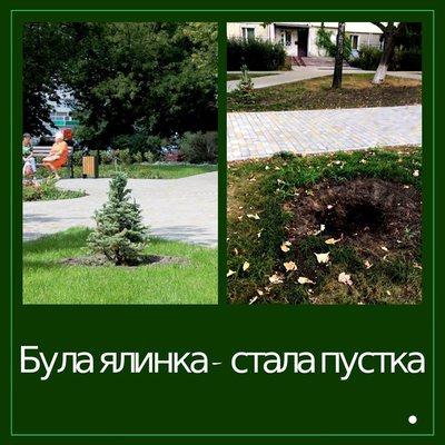 В киевских парках сотнями крадут зеленые насаждения