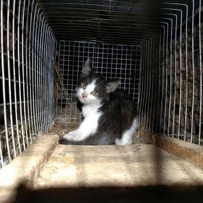 Искусство попадать в неприятности: к одному и тому же котенку спасатели выезжали два раза