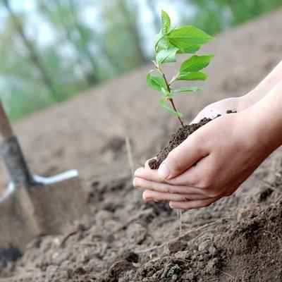 Киевлян приглашают поучаствовать в осенней посадке деревьев