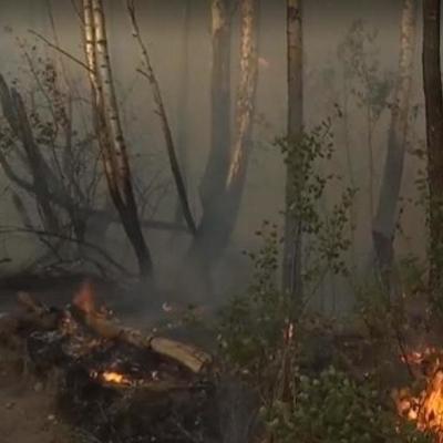 Женская месть: стало известно, из-за кого произошел пожар в Чернобыльской зоне