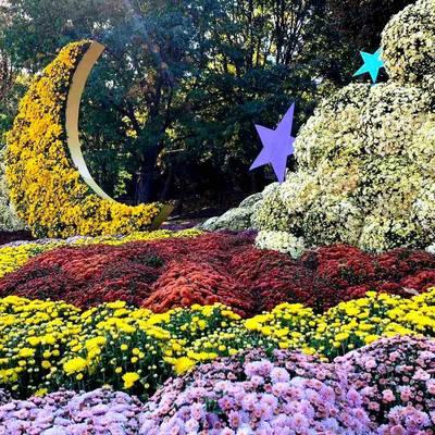 Завтра открывается фестиваль хризантем