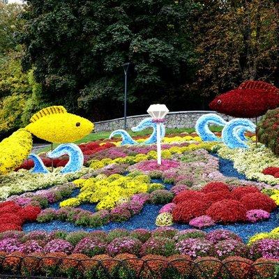 Открытие фестиваля хризантем: появились фото